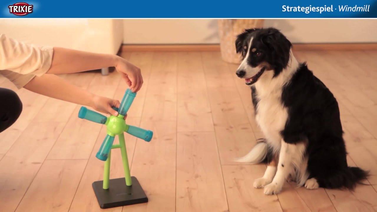 dog activity strategiespiel windmill intelligenzspielzeug f r hunde youtube. Black Bedroom Furniture Sets. Home Design Ideas