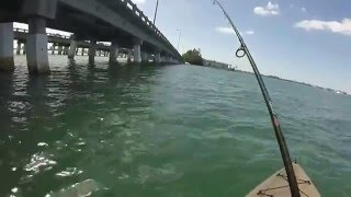 good fishing day at ringling bridge Sarasota FL