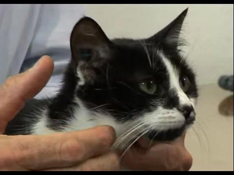 Les Vaccins Du Chat