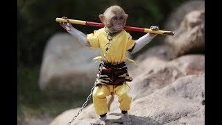 Disciplined and Trained Monkeys | Funny Monkeys | Funny Compilations
