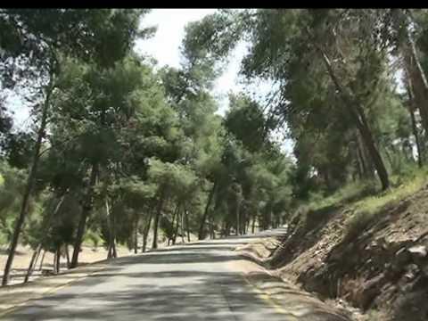 Memorial Trees In Israel For D'Lynn