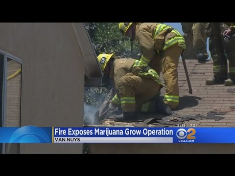 Fire At Van Nuys Home Tips Authorities To Marijuana Grow Operation