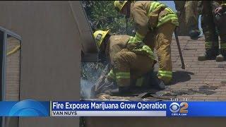 Fire At Van Nuys Home Tips Authorities To Marijuana Grow Operation thumbnail