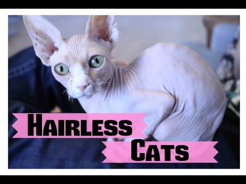 10 Things About Hairless Cats You Might Not Know
