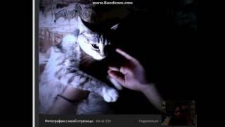 рассказ о кошке