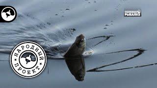 Плотва и подлещик на поплавочную удочку | Народный проект