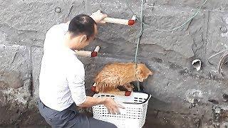 右腕に猫、左手ではしご上る 救った男性「大丈夫っす」 thumbnail
