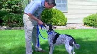 Part 2: Innotek Remote Collar Training For Dogs - Www.innotek.net