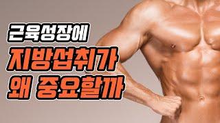 근육을 키우는데 지방 섭취가 왜 중요할까? ft. 근육…