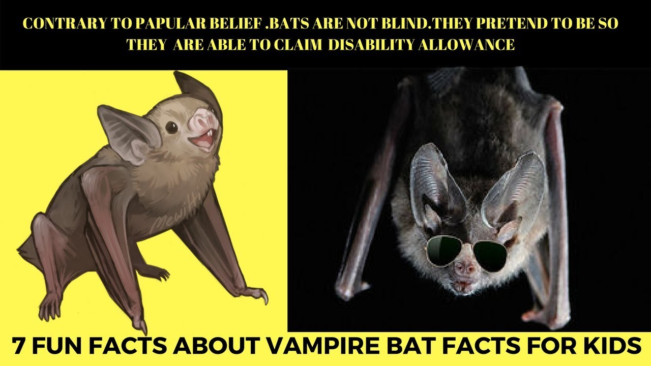 Fun Facts About Vampire Bat For Kids Bites Human And Feeding On Cow