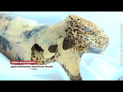 В Крыму обнаружены останки гигантской доисторической птицы