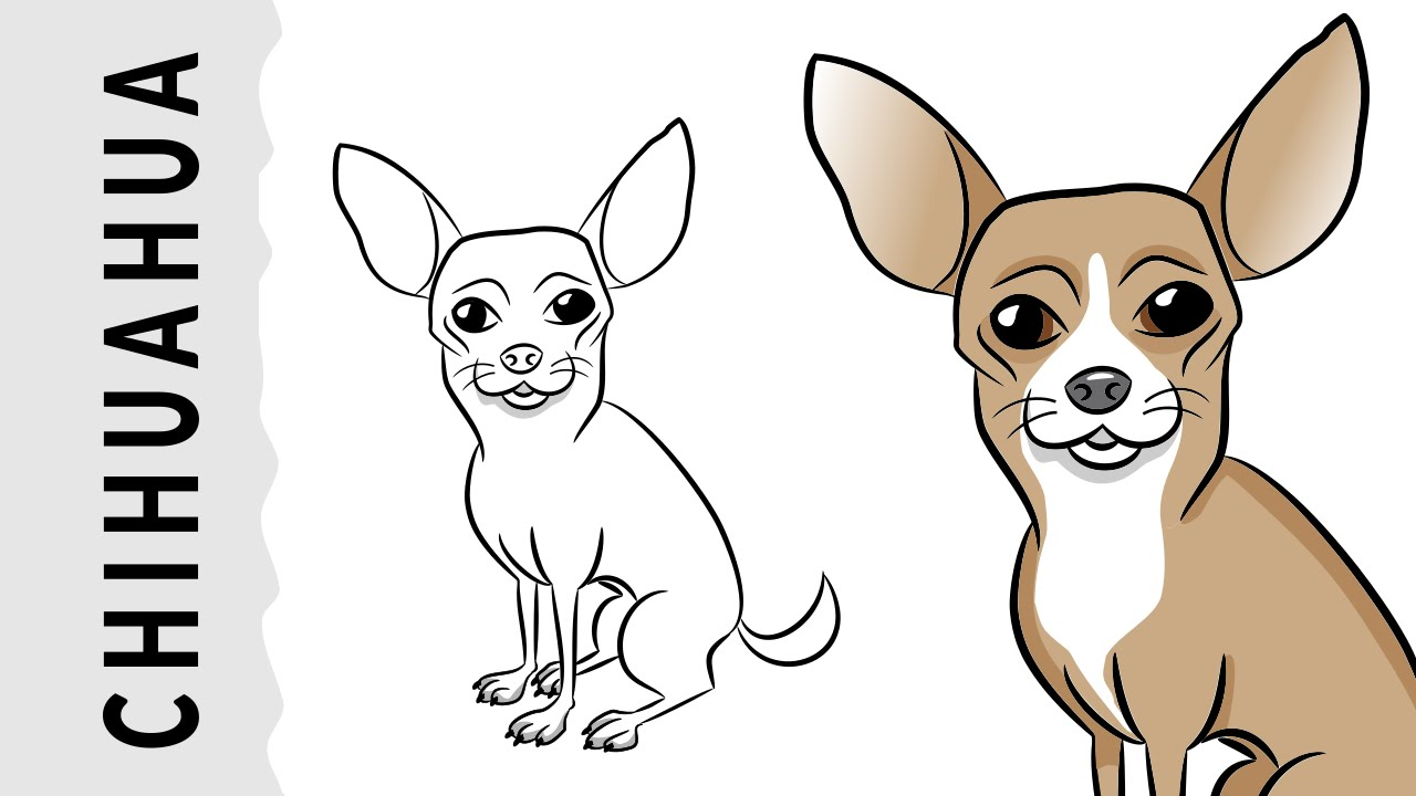 how to draw a chihuahua dog wie zeichnet man einen chihuahua hund youtube