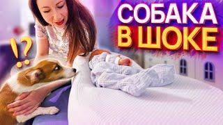ПЕРВАЯ РЕАКЦИЯ Собаки Джины на Малыша Спарти | Elli Di Pets