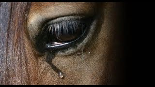 Video What About Us  ||  Tribute To Abused Horses download MP3, 3GP, MP4, WEBM, AVI, FLV Juli 2018
