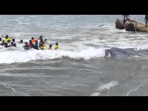 Dead whale washed ashore at Moree in Ghana
