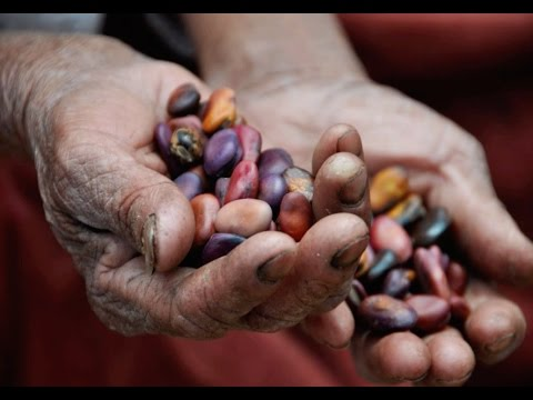 What Indigenous Farmers Taught Me About Building Seed and Food Sovereignty
