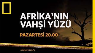 Nat Geo Wild Afrikann Vahi Yz
