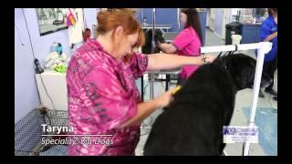 K-9 Design Dog And Pet Grooming, Pet Supplies Store, Riverton, Utah