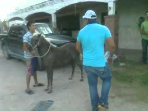 pony salvaje