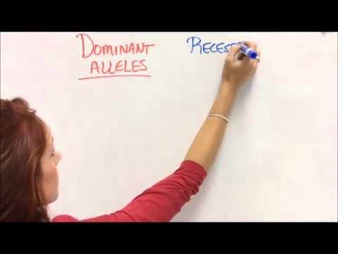 Dominant vs Recessive Traits