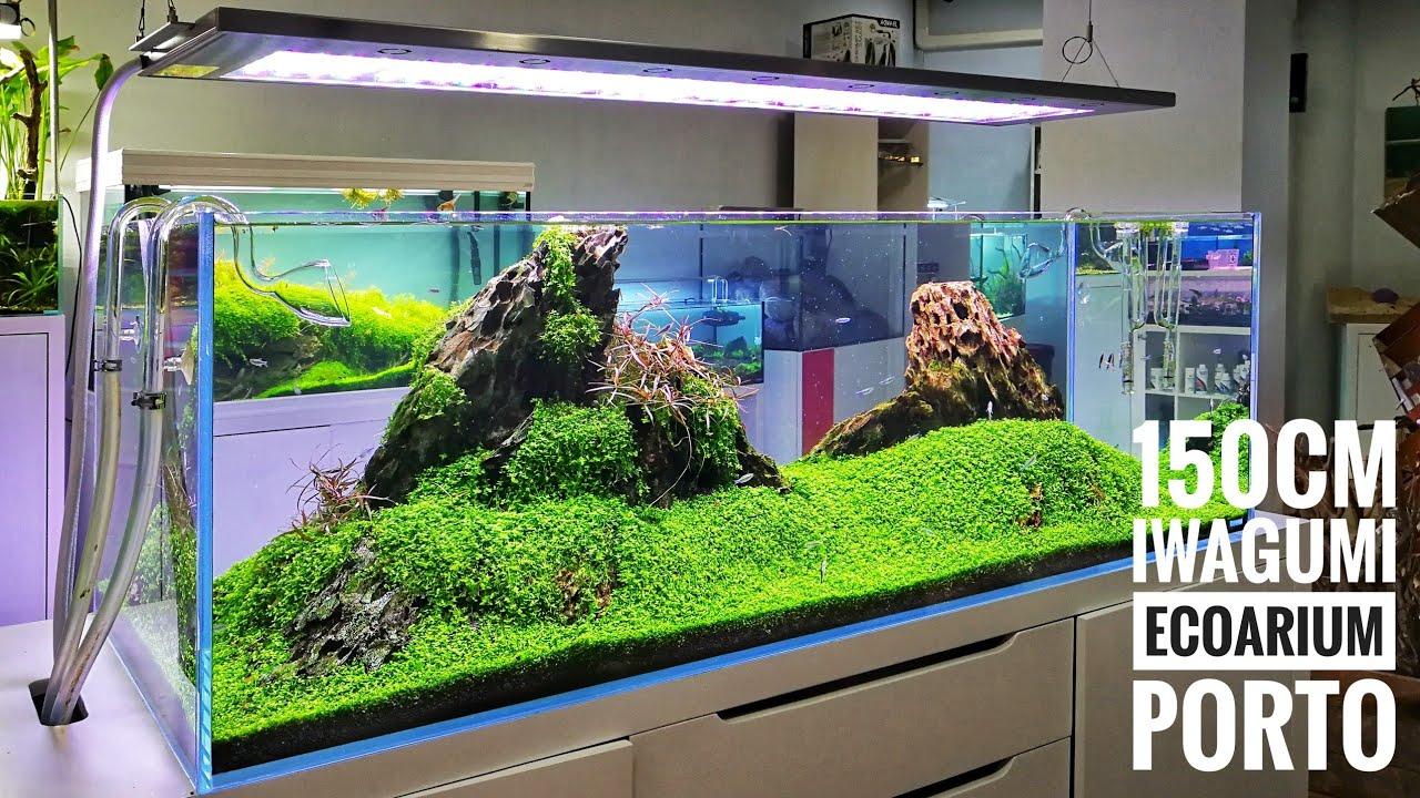 150cm Iwagumi Ecoarium Store Porto Youtube