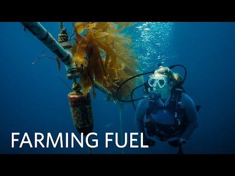 Wild Kingdom   Kelp Forest Ecosystem   Farming Fuel