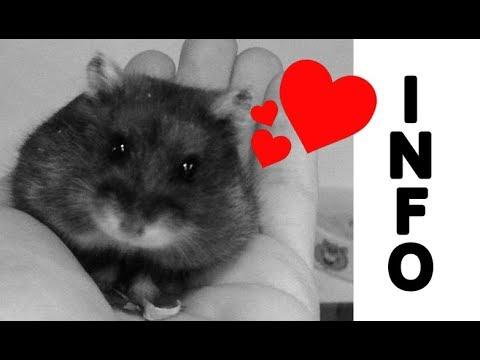 Abschied nehmen † Tod von Darth Hamster ♥ Infos & Update