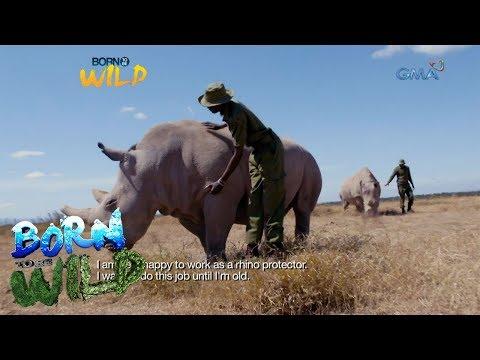 Born to Be Wild: Doc Nielsen Donato meets Najin and Fatu, the last two northern white rhinos