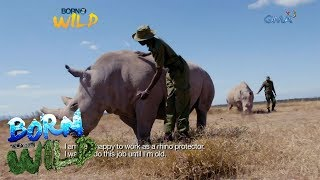 Born to Be Wild: Doc Nielsen Donato meets Najin and Fatu, the last two northern white rhinos