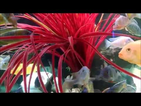 DJ J-Krisp's Luke Bryan- Shake That Country Girl [Aquaridise Red Tank]