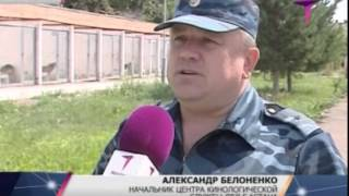 Около 11 кг героина в Астане нашли служебные собаки