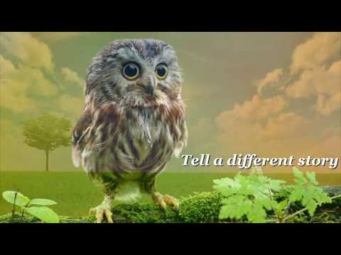 ABRAHAM-HICKS ~ TELL A DIFFERENT STORY ~ music by Francine Jarry