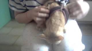 une chatte pas comme les autres