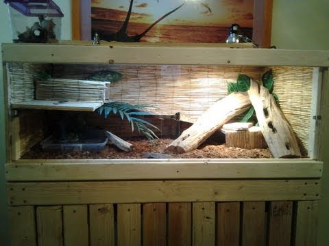 new baby tegu and cage set up youtube