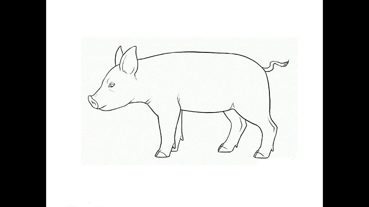 Как на рисовать свинью