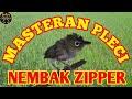 Masteran Pleci Nembak Zipper Plus Terapi Sangat Cocok Untuk Pleci Yang Lagi Mabung  Mp3 - Mp4 Download