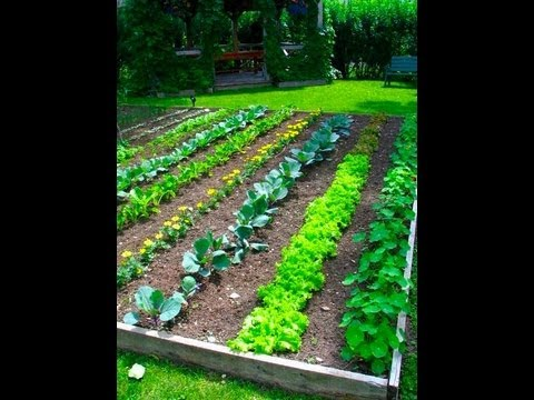 Garden Project Garden Layout Youtube