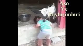 Aso ve paylaşımları Kürtçe komik video 😂😂🤛