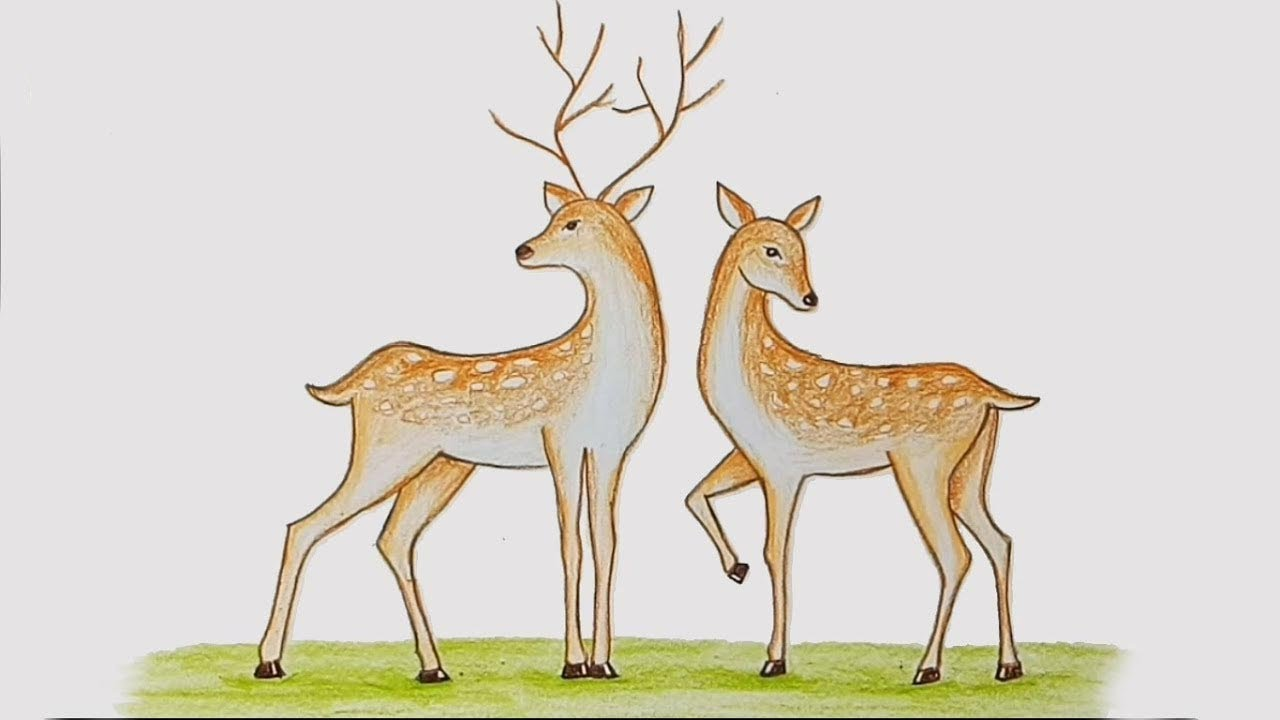 How To Draw Two Deer Step By Step Youtube