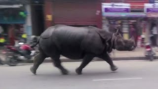 Rhino rampage: Wild animal terrifies Nepal town, killing 1 & injuring 6
