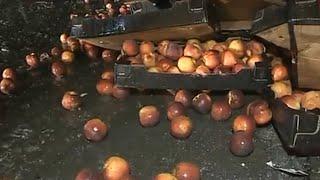 Массовое уничтожение санкционных продуктов в России