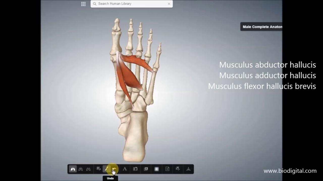 Ausgezeichnet Online 3d Anatomie Fotos - Anatomie Von Menschlichen ...