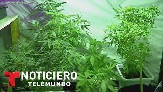 Líder de la iglesia católica mexicana apoya uso de la marihuana | Noticiero | Noticias Telemundo
