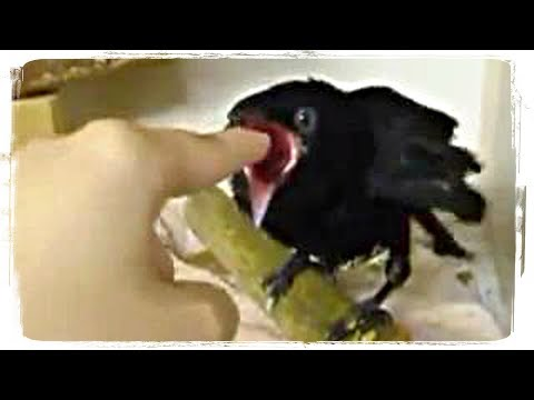 ПРИКОЛЫ С ЖИВОТНЫМИ (смешные птицы) | FUN WITH ANIMALS (funny birds) #379