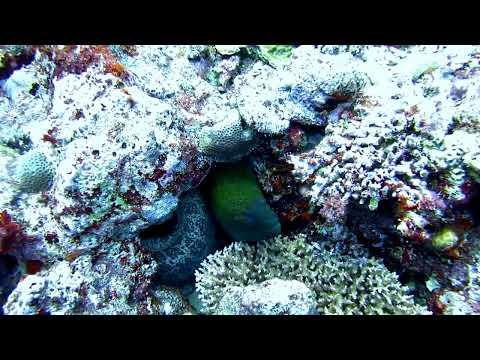 Moray eel, near Moso Island, Vanuatu.