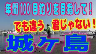 釣り動画ロマンを求めて 315釣目(城ヶ島 ※岸壁)