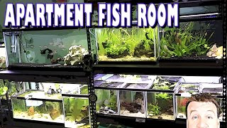 Can You Do a Fish Room in an Apartment? She Did! *Fish Room Tour* Bettas & Cichlids