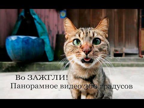 Маша и медведь. Про Татьяну ₯☺ᴽиз YouTube · С высокой четкостью · Длительность: 36 с  · Просмотры: более 148.000 · отправлено: 17-1-2012 · кем отправлено: Nikolay Nikolaevich