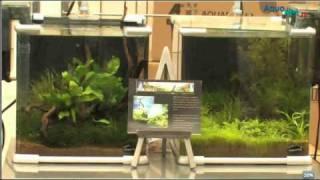 Paluplanta Aqua Show.avi