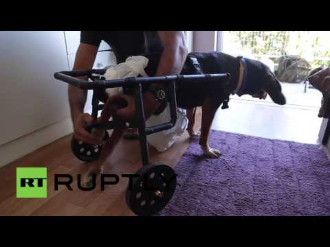Greece: Plumber's wheelchairs for dogs bring joy to disabled canines